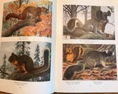 1918 Wild animals of North america National Geographic Society Washington DC hardcover