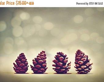 Winter Art Prints: Pine Cones Fine Art Nature Photography Still Life Photography Christmas pine cone nature photos botanical art prints