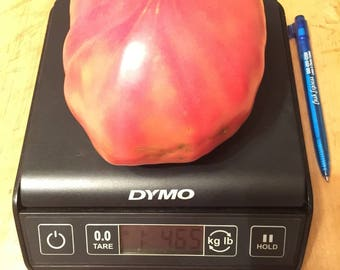 15 Giant Chudo Zemli (Wonder of the World)  Heirloom tomato seeds-1375