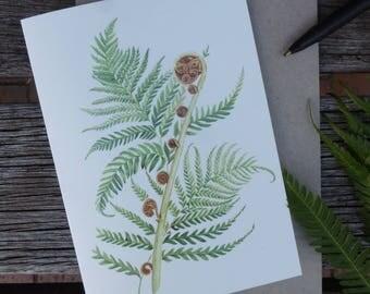 Australian Tree Fern (Cyathea cooperi)