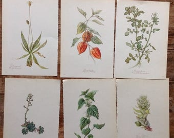 ON SALE Big lot of vintage Botanical Flower print Book Plate 1940s