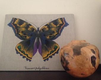 Modern Wall Decor/ Butterfly Print/ Art Canvas Picture/ Children Art/ Nursery/ Home Decor