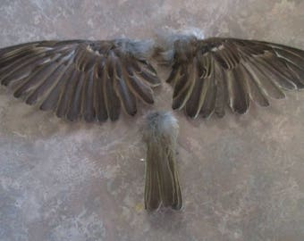 House Sparrow Bird Wing Set Plus Tail