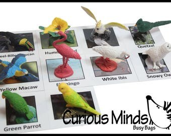 Tropical Exotic Bird Animal Matching Toy - Educational Montessori