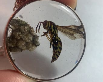 REAL Wasp Set Nest and Insect Floating Specimen Resin Taxidermy Vulture Culture Necklace