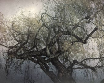 The Whispering Tree--wall art, nature, twisted tree, Gothic print, nature print, gnarled tree, nature photographic print, nature art