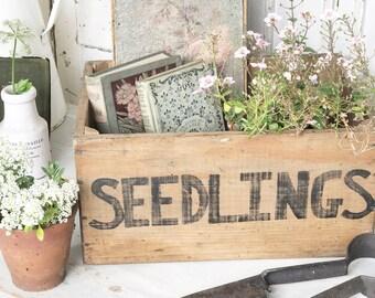 """A vintage wooden """"seedlings"""" crate"""