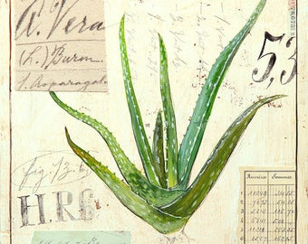 Aloe Vera Print, Succulent Print, Botanical Print, Botanical Illustration, Succulent Illustration, Aloe Illustration