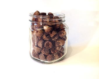 Acorns and Caps Vase Filler Crafts Decor One Only