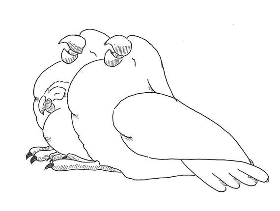 Sally Blanchard's Original Cartoon Drawing of Sleepng Baby Umbrella Cockatoo bookends for an African Grey Parrot