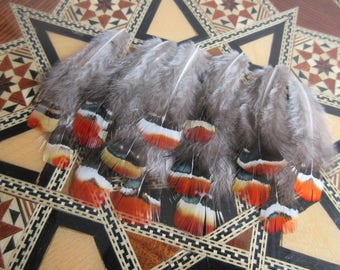 Lady Amherst pheasant feathers, red orange, iridescent green 6-8cm 20pcs