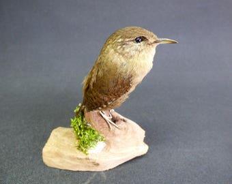 TAXIDERMY Wren (Troglodytes troglodytes) no.9661 Mounted On Driftwood. Garden Bird.