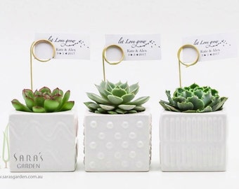 Succulent Favours in a Mix of Square Ceramic Pots, Wedding Succulent Bombonieres, Sydney Corporate Gifts, Succulent Gifts, Minimum Order: 20