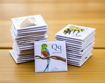 Quetzal Aimants frigo Cathy Faucher illustration  2x2 pouces  Aimants rigides  Illustré au Québec  Imprimé au Canada