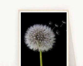 Dandelion Print, Dandelion Printable, Botanical Print, Dandelion Photography, Instant Download, Wall Decor