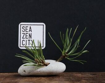 Coastal Christmas Decor - Natural Rustic Wabi-Sabi Decor - Holey Beach Stone and Pine Tree Branch