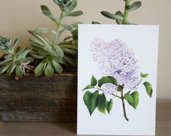 Common Lilac Postcard - Botanical Postcard
