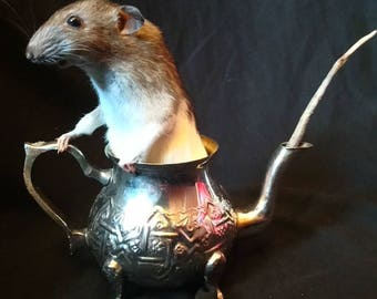 Rat-Tea - Rat in Vintage Teapot, Taxidermy, Large White and Brown