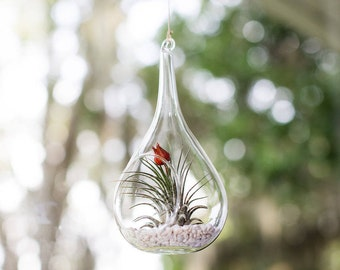 Red Bud Hanging Terrarium