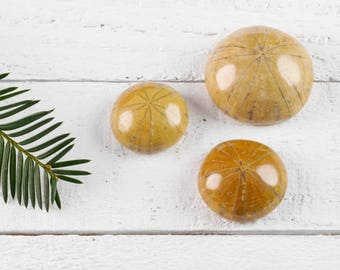 Fossil SAND DOLLAR - Mini, S, or M - Fossil Gift, Sea Shell Mermaid Gift, Sea Biscuit, Fossil Rock, Fossil Stone, Fossil Shell Stone E0721