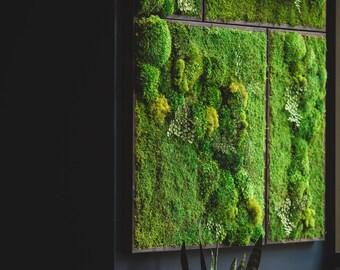 preserved moss etsy. Black Bedroom Furniture Sets. Home Design Ideas