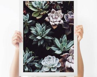 Colorful Cacti Print, Succulent Cactus Photo, Wall Art Photo, Art Photo, Modern Minimal, Home Decor, Desert, Cacti Art Print,