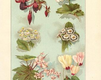 Vintage 1907 Book Plate — Greenhouse Plants