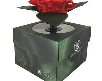 Gift box Xxl with Base