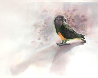Senegal Parrot original watercolor painting. Bird art, painting of bird