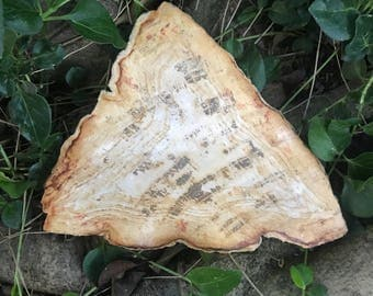 Large Petrified Wood Slab Large Petrified Wood Altar Plate Carved Petrified Wood Platter Fossilized Wood Fossilized