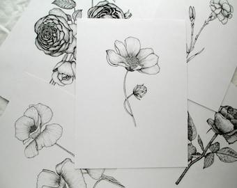 Gerbera Flower Illustration Giclee Print
