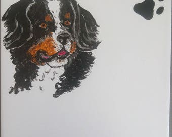 plate number Bernese mountain dog