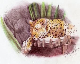 Art Print Sleeping Leopard