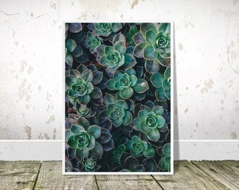 Succulent Print, Succulent Photography, Botanical Wall Art, Cactus Wall Art, Nature Photography, Cactus Printable,Succulent Art,Cactus Print
