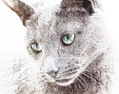 Poppy the Russian Blue Bl...