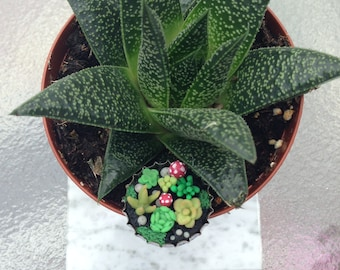 Bottle-Cap Succulent Garden
