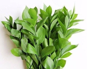 Fresh Israeli Ruscus Bunches   (Free Shipping)