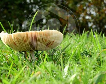Mushroom in the high grass
