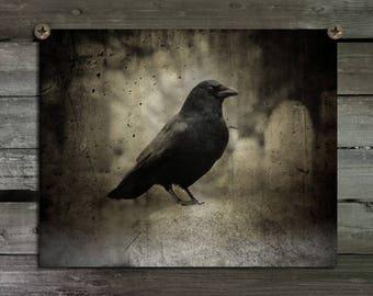 Crow Photograph, Raven Wall Art,Goth, Corvidae, Graveyard, Eerie Print, Halloween Blackbird, Gothic Decor, Dark, Rook - Crow In The Darkness