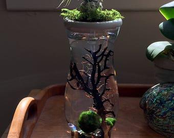 Marimo Moss Ball. Air Plant.Stone Top.Vase. Mini Aquarium/Terrarium