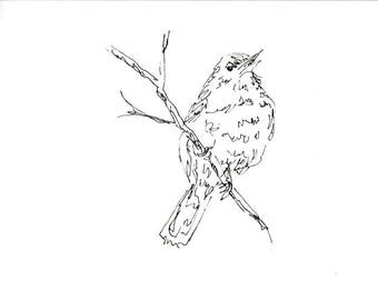 Sketchbook Sale - Bird #8 Original Ink Line Drawing - 8x10 Songbird Original Art