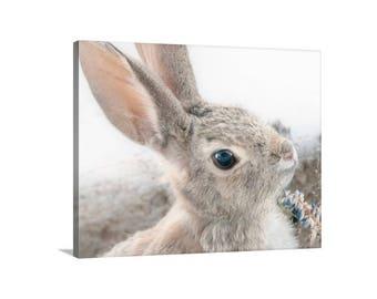 Bunny Picture, Rabbit Photograph, Cottontail, Wildlife Art, Cute Animals, Photo on Canvas, Tucson Arizona, Art for Bedroom, Mammals
