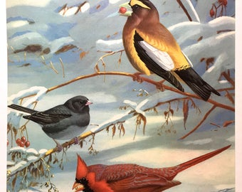 Grosbeak, Cardinal, Junco Bird Print ~Vintage Print, Illustration, Book Plate ~Nursery decor ~ Walter Weber ~ Traveling with Birds 1933