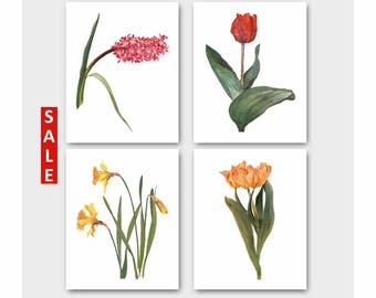Spring Flower Prints, Set of 4 Botanical Wall Art (French Country Home Decor, Vintage Cottage Artwork) --- Daffodil, Tulip, Hyacinth