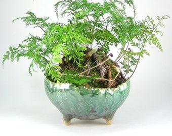 Green Bonsai Planter, Footed Flower Pot, Green Glazed Kusamono, Succulent Pot Rounded Stoneware Planter Handbuilt Ceramic Plant Pot 01-17-20