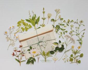 Botanical FlowerEphemera - 18 Die Cuts - Handmade Die Cuts - Botanics - White - Handmade Vintage Bookpage Envelope