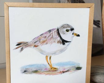 The Piping Plover, drawing of a shore bird, framed, ready to hang