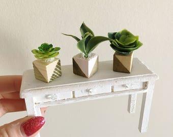 Miniature Succulent Trio