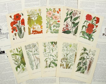 Red White Medicinal Plants - Set of 10 Vintage Botanical Book Pages - 1973. Herbaceous Drug Plants Flowers Illustration Print Scraps Collage