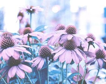 Botanical Print - Nature - Flower - Home Decor - Wall - Interior - Photography -